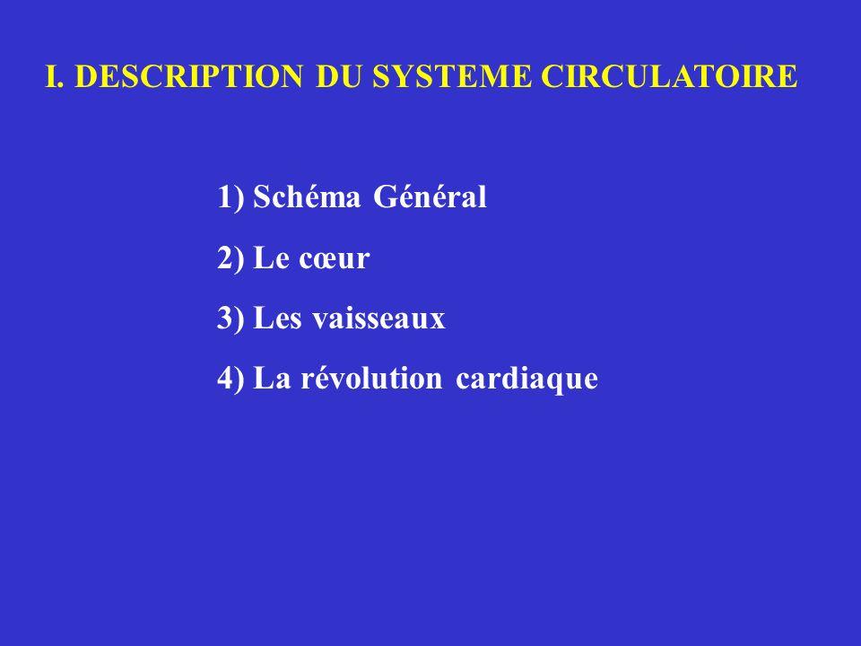 I. DESCRIPTION DU SYSTEME CIRCULATOIRE 1) Schéma Général 2) Le cœur 3) Les vaisseaux 4) La révolution cardiaque