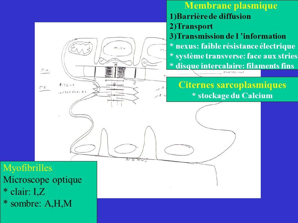 Membrane plasmique 1)Barrière de diffusion 2)Transport 3)Transmission de l information * nexus: faible résistance électrique * système transverse: fac