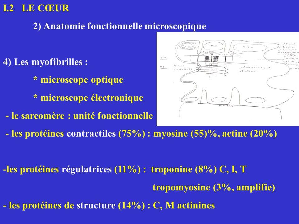 I.2 LE CŒUR 2) Anatomie fonctionnelle microscopique 4) Les myofibrilles : * microscope optique * microscope électronique - le sarcomère : unité foncti