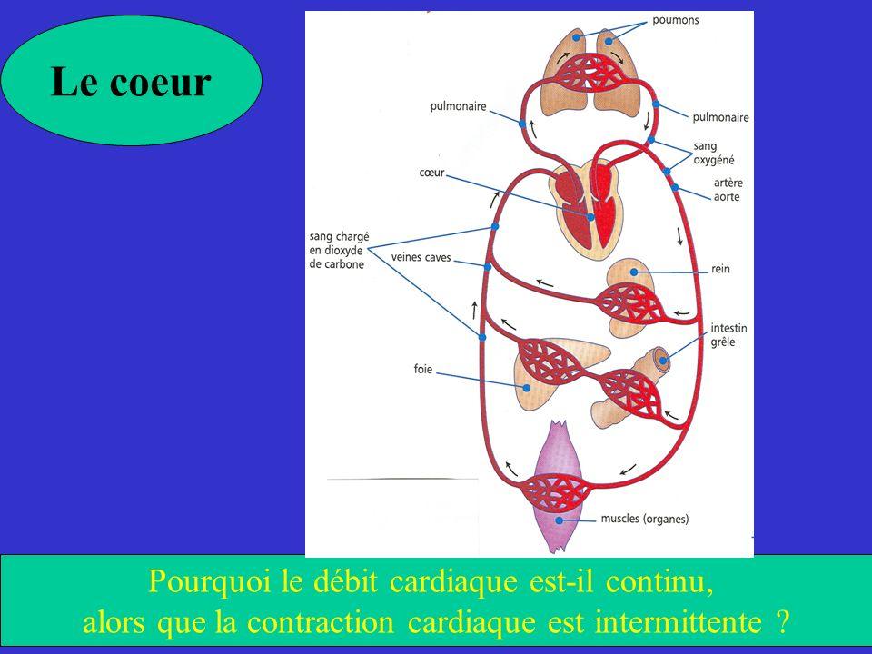 Le coeur Pourquoi le débit cardiaque est-il continu, alors que la contraction cardiaque est intermittente ?