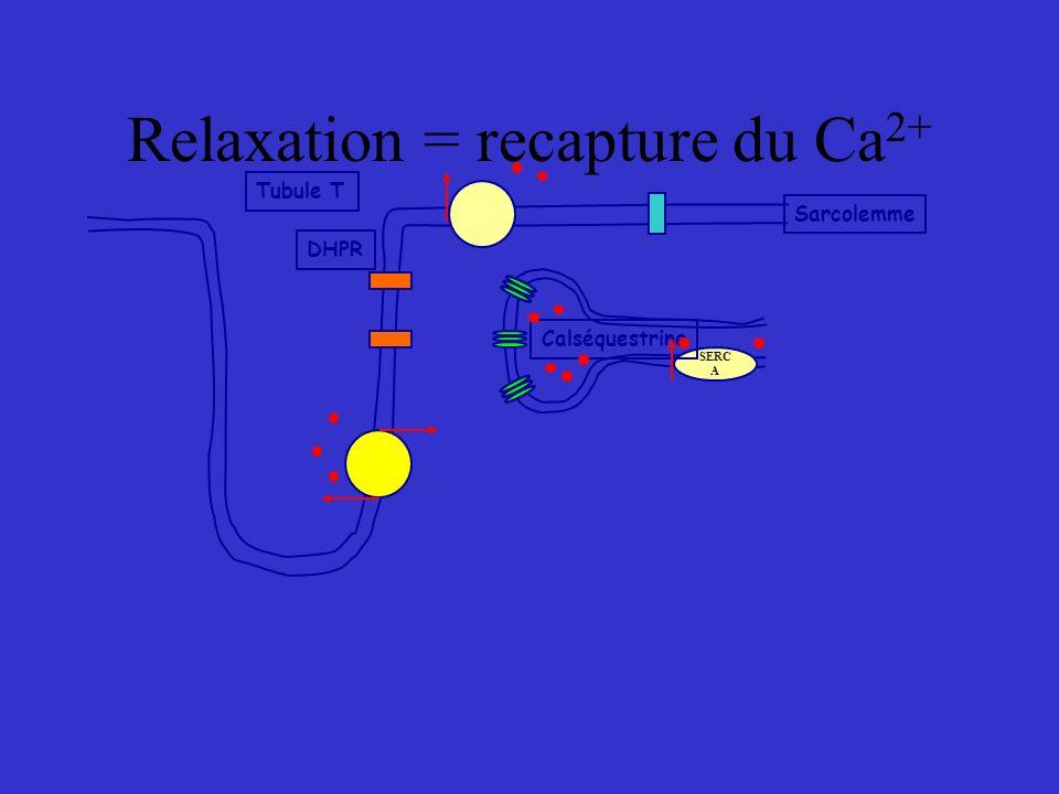 Relaxation = recapture du Ca 2+ SERC A Calséquestrine Tubule T DHPR Sarcolemme