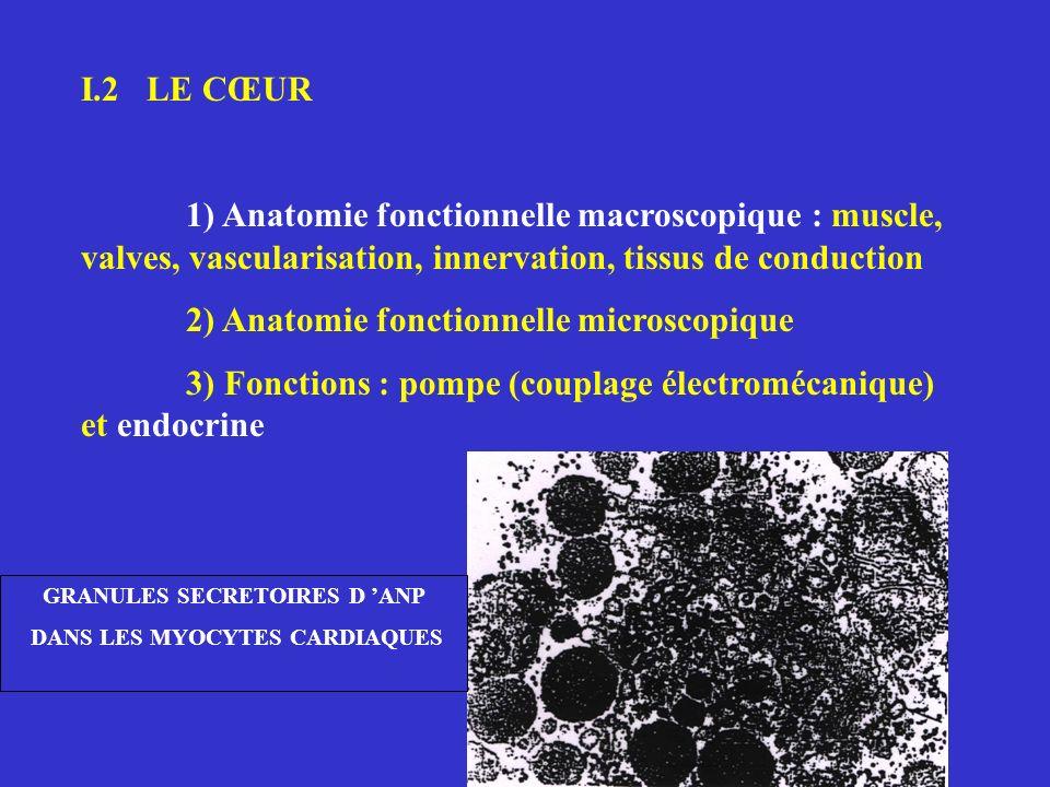 I.2 LE CŒUR 1) Anatomie fonctionnelle macroscopique : muscle, valves, vascularisation, innervation, tissus de conduction 2) Anatomie fonctionnelle mic