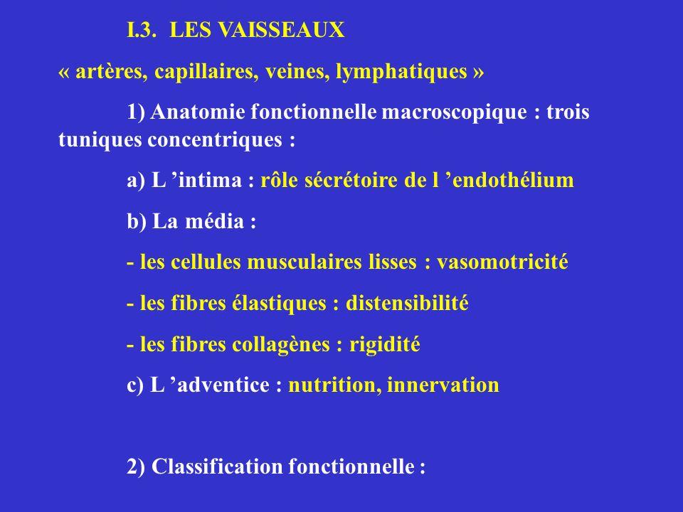I.3. LES VAISSEAUX « artères, capillaires, veines, lymphatiques » 1) Anatomie fonctionnelle macroscopique : trois tuniques concentriques : a) L intima