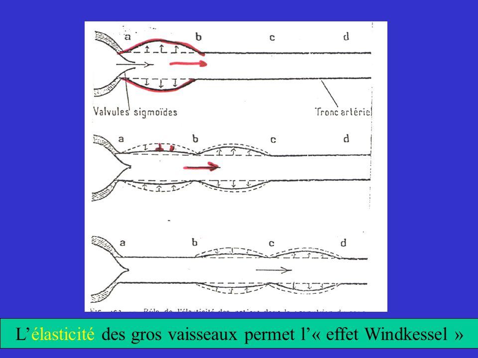 Lélasticité des gros vaisseaux permet l« effet Windkessel »