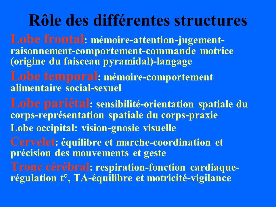 Rôle des différentes structures Lobe frontal : mémoire-attention-jugement- raisonnement-comportement-commande motrice (origine du faisceau pyramidal)-