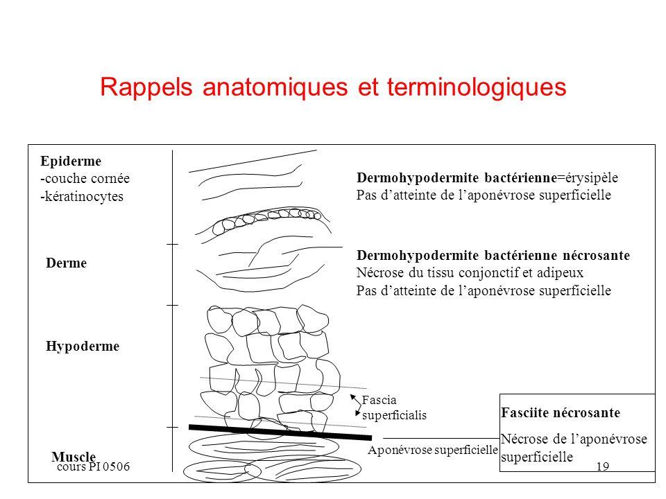 cours PI 050619 Rappels anatomiques et terminologiques Epiderme -couche cornée -kératinocytes Derme Hypoderme Muscle Dermohypodermite bactérienne=érys