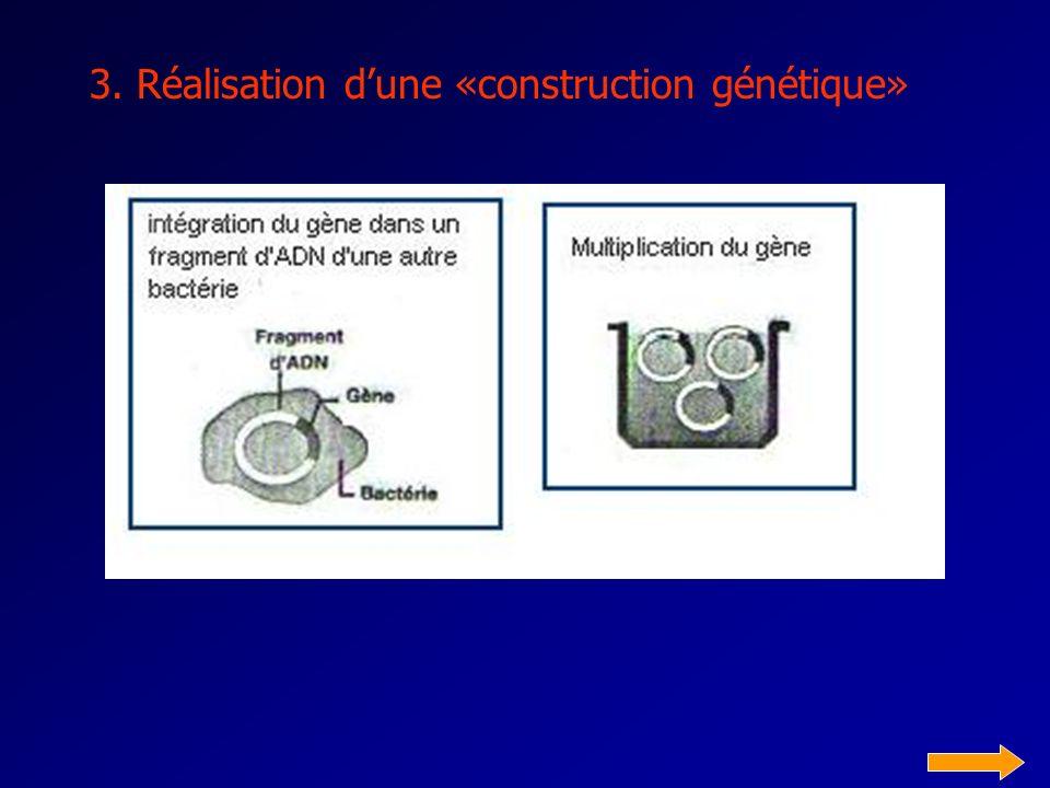 2. Identification et isolement du gène dintérêt