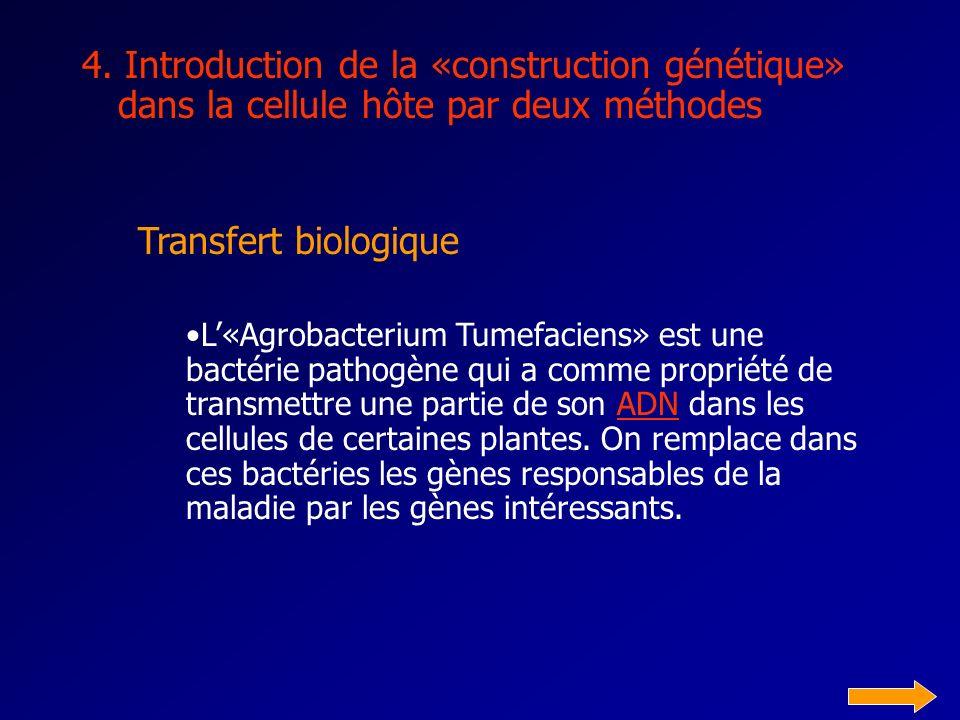 3. Réalisation dune «construction génétique»