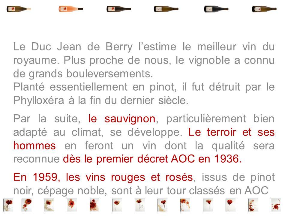 Le Duc Jean de Berry lestime le meilleur vin du royaume. Plus proche de nous, le vignoble a connu de grands bouleversements. Planté essentiellement en
