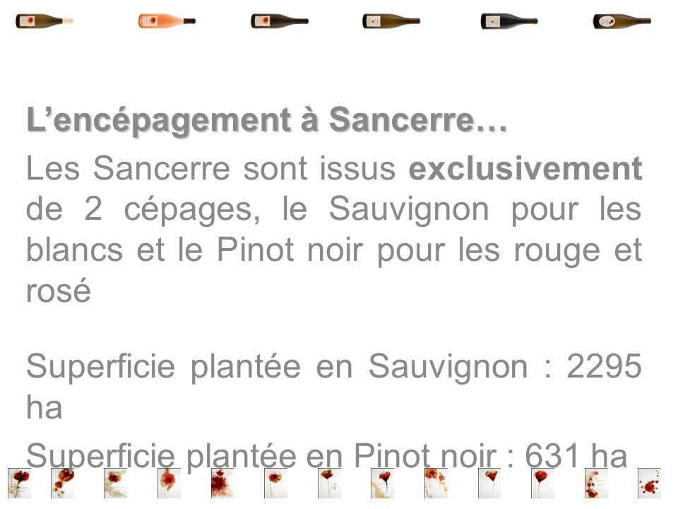 Lencépagement à Sancerre… Les Sancerre sont issus exclusivement de 2 cépages, le Sauvignon pour les blancs et le Pinot noir pour les rouge et rosé Sup