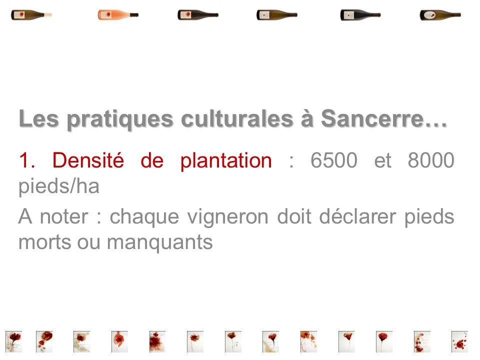 Les pratiques culturales à Sancerre… 1. Densité de plantation : 6500 et 8000 pieds/ha A noter : chaque vigneron doit déclarer pieds morts ou manquants
