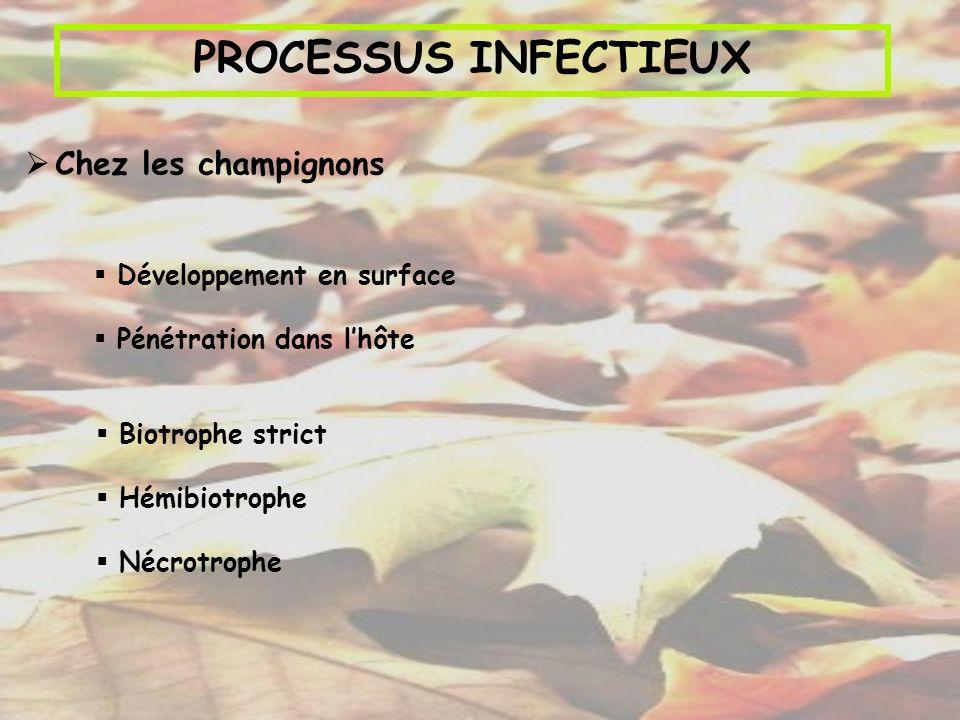 PROCESSUS INFECTIEUX Chez les champignons Biotrophe strict Hémibiotrophe Nécrotrophe Développement en surface Pénétration dans lhôte