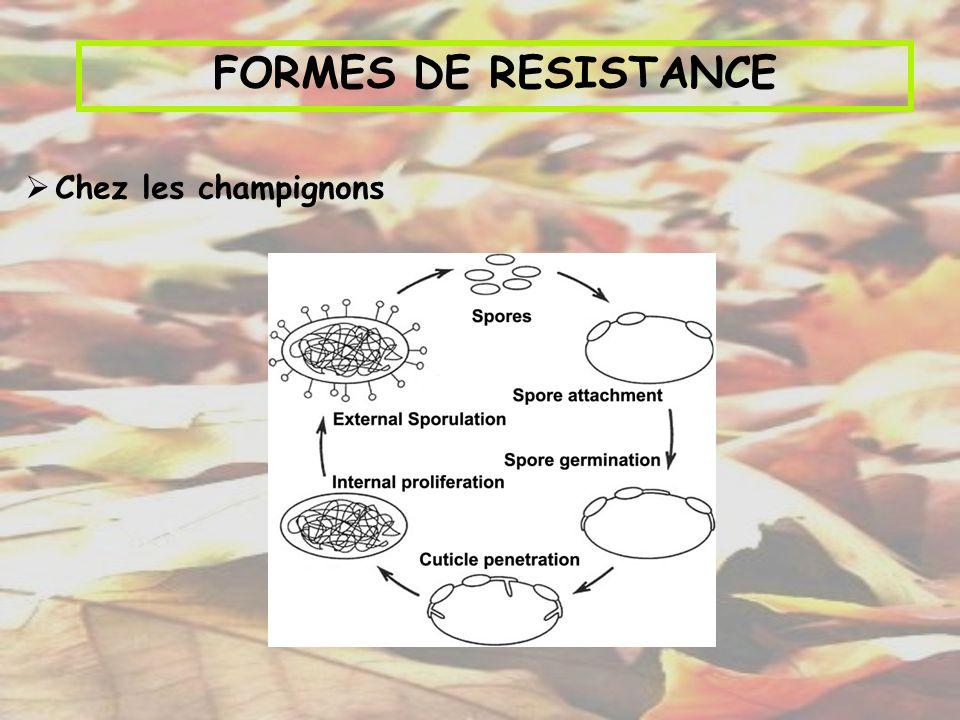 FORMES DE RESISTANCE Chez les champignons