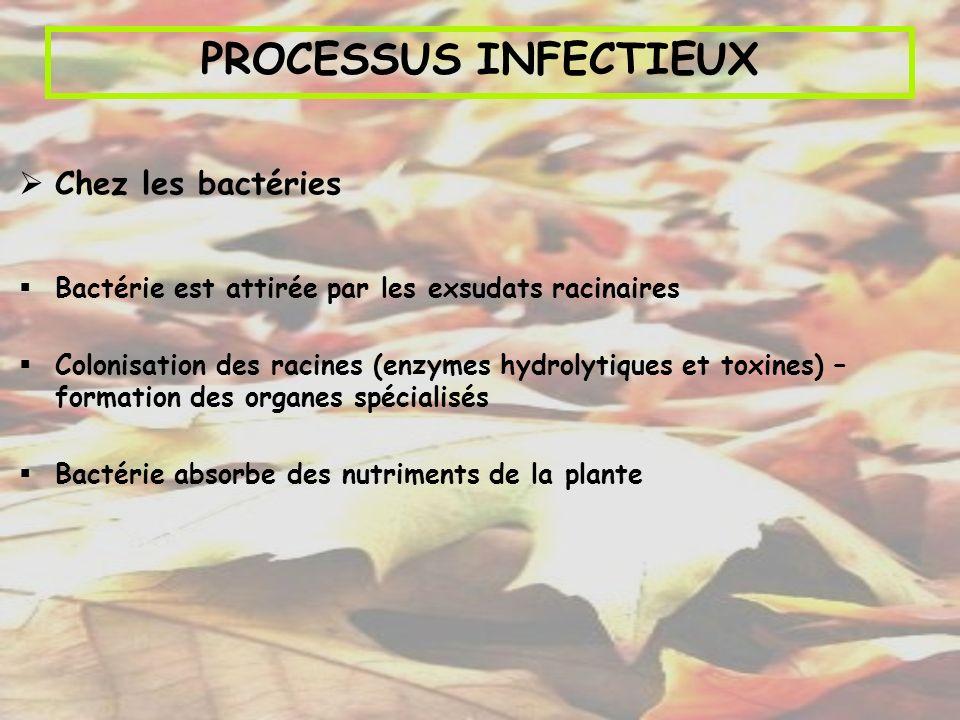 PROCESSUS INFECTIEUX Chez les bactéries Bactérie est attirée par les exsudats racinaires Colonisation des racines (enzymes hydrolytiques et toxines) –