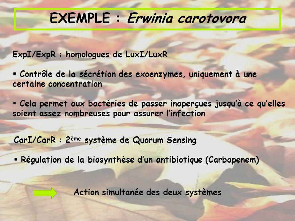 ExpI/ExpR : homologues de LuxI/LuxR Contrôle de la sécrétion des exoenzymes, uniquement à une certaine concentration Cela permet aux bactéries de pass