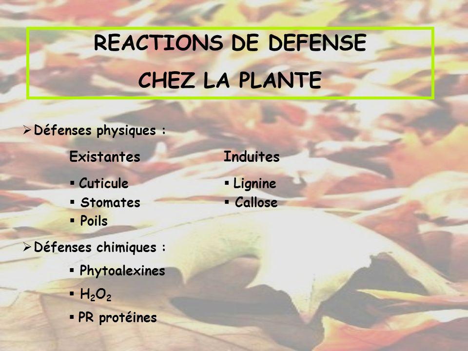REACTIONS DE DEFENSE CHEZ LA PLANTE Défenses physiques : Défenses chimiques : Phytoalexines H 2 O 2 PR protéines Existantes Cuticule Stomates Poils In