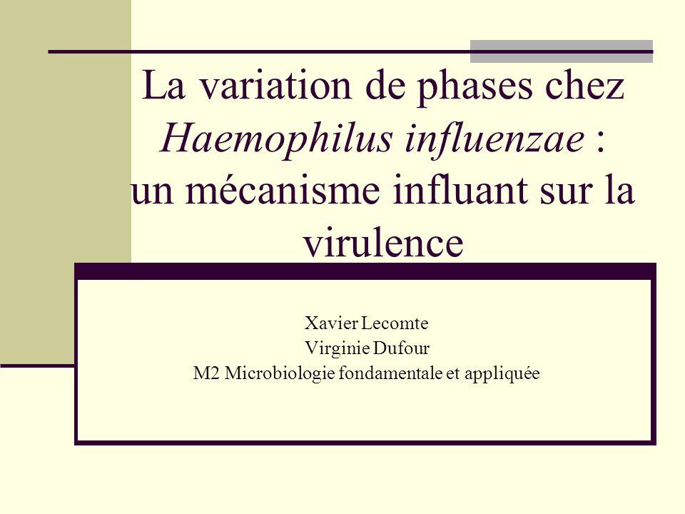 Haemophilus influenzae : généralités Gram – γ protéobactérie Naturellement présente dans les voies respiratoires Majeure cause de méningites chez les jeunes enfants Premier génome séquencé en 1995