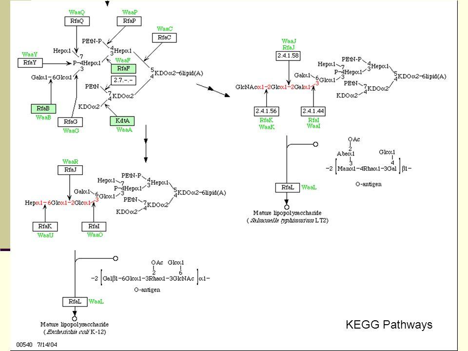 Variations du LPS : exemple de ChoP Variation de phase = changement de cadre de lecture à cause répétitions (ici 5CAAT3) Choline phosphotransférase ~ choline kinase eucaryote ChoP codée par lic1A Phosphocholine : liée aux heptoses et KDO dans le core du LPS Variation de phase de lic1A = ChoP + ou ChoP -