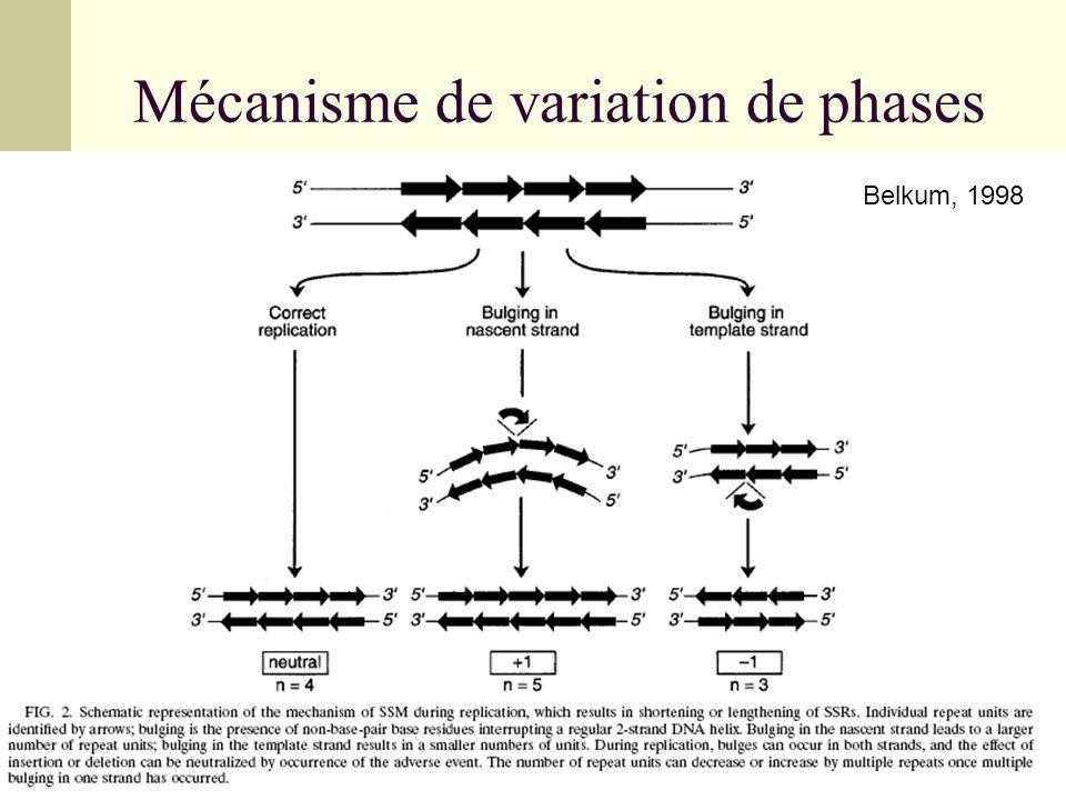 Effets de la variation de phase ex : orf1 du locus lic3 (acide sialique) +1SD=RBS ATG +2 (CAAT)n Protéine tronquée lic3-orf1 Stop T +1SD=RBS ATG +1 (CAAT)n Protéine fonctionnelle lic3-orf1 Stop T +1SD=RBS(CAAT)n Pas de traduction T +3 : Pas ATG Stop +1SD=RBSATG +2(CAAT)n-1 Protéine fonctionnelle lic3-orf1 T