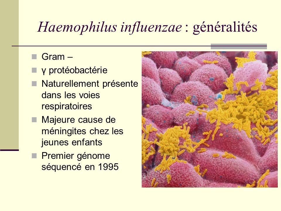 Lipopolysaccharide = LPS