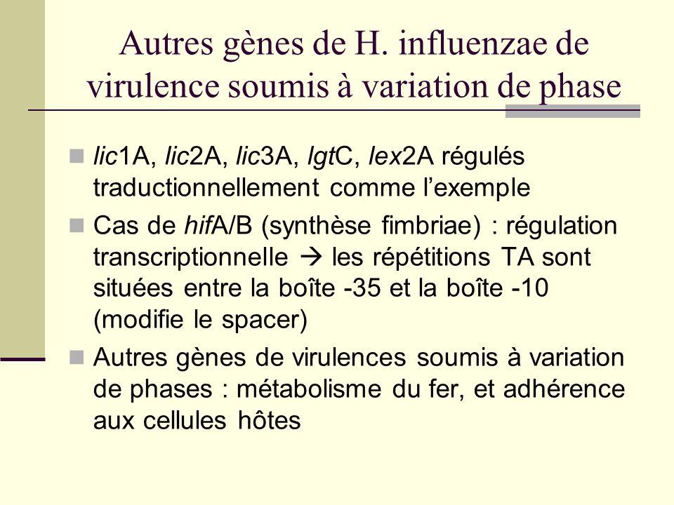 Conclusion… Décorations du LPS : virulence et cible du système immunitaire Modifications : variation de phase pour les gènes les + importants dans la virulence Grande diversité des LPS échappement immunitaire et virulence Variation de phase = variation de phénotype selon les étapes dinfection
