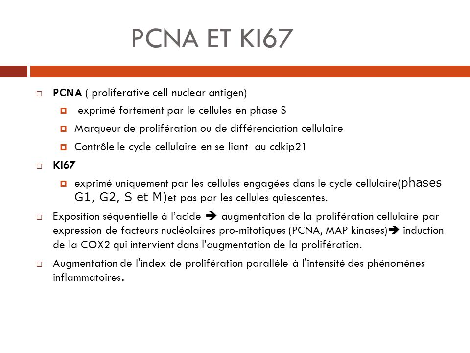PCNA ET KI67 PCNA ( proliferative cell nuclear antigen) exprimé fortement par le cellules en phase S Marqueur de prolifération ou de différenciation c