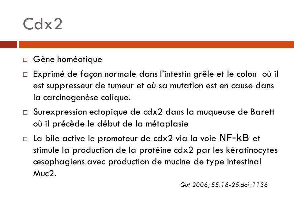 Cdx2 Gène homéotique Exprimé de façon normale dans lintestin grêle et le colon où il est suppresseur de tumeur et où sa mutation est en cause dans la