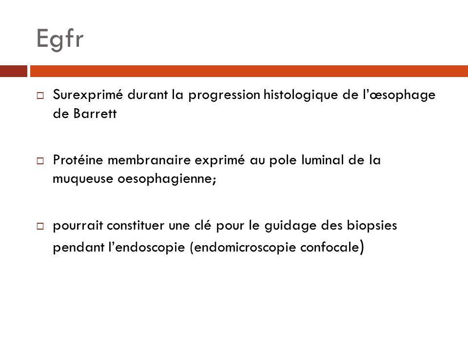 Egfr Surexprimé durant la progression histologique de lœsophage de Barrett Protéine membranaire exprimé au pole luminal de la muqueuse oesophagienne;