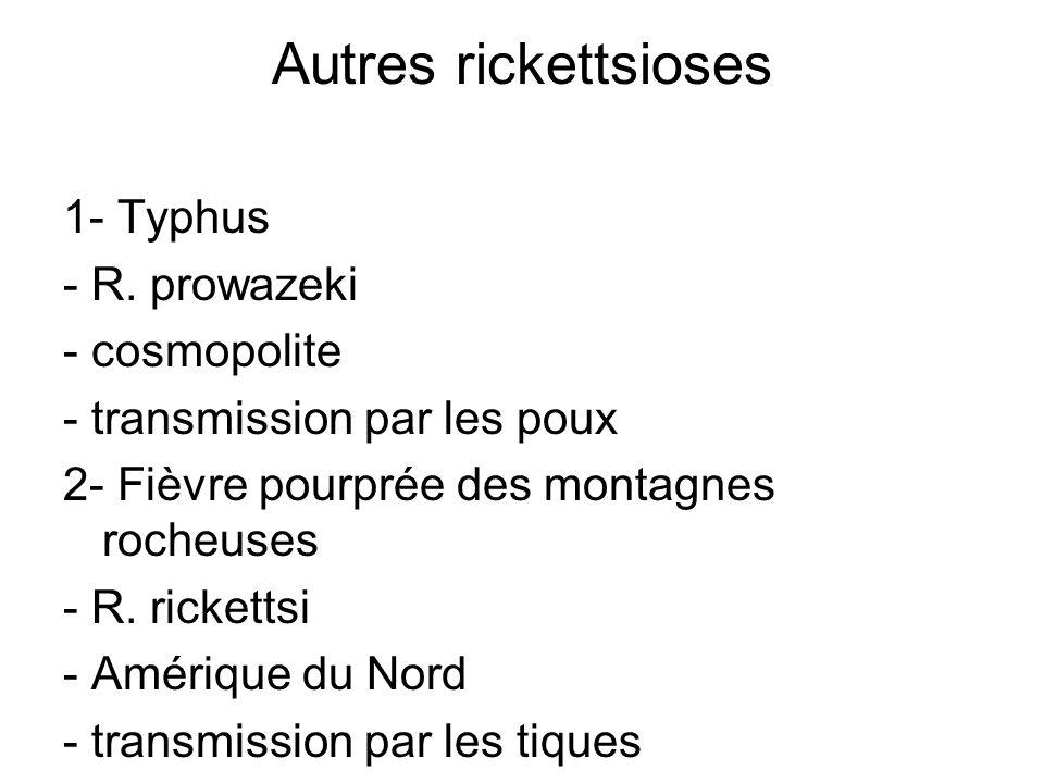 Autres rickettsioses 1- Typhus - R. prowazeki - cosmopolite - transmission par les poux 2- Fièvre pourprée des montagnes rocheuses - R. rickettsi - Am