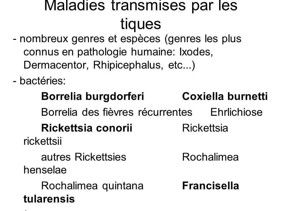 Maladies transmises par les tiques - nombreux genres et espèces (genres les plus connus en pathologie humaine: Ixodes, Dermacentor, Rhipicephalus, etc...) - bactéries: Borrelia burgdorferiCoxiella burnetti Borrelia des fièvres récurrentesEhrlichiose Rickettsia conoriiRickettsia rickettsii autres RickettsiesRochalimea henselae Rochalimea quintanaFrancisella tularensis - virus: Flavivirus des encéphalites à tiques Fièvres à tiques - parasites: Babésioses (piroplasmose) Theilérioses