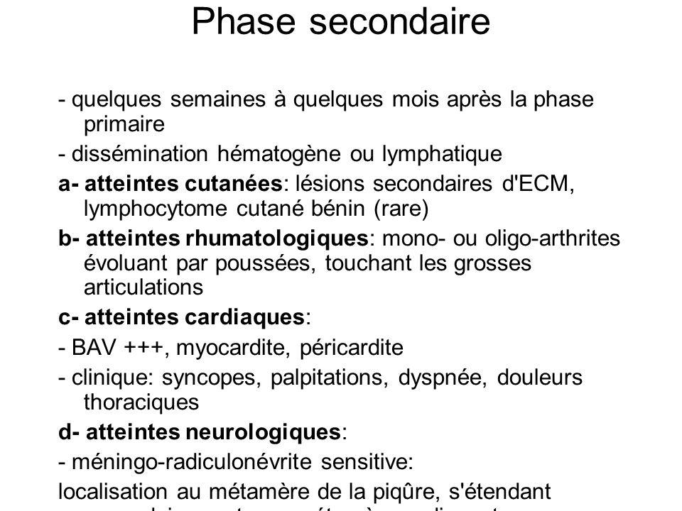 Phase secondaire - quelques semaines à quelques mois après la phase primaire - dissémination hématogène ou lymphatique a- atteintes cutanées: lésions secondaires d ECM, lymphocytome cutané bénin (rare) b- atteintes rhumatologiques: mono- ou oligo-arthrites évoluant par poussées, touchant les grosses articulations c- atteintes cardiaques: - BAV +++, myocardite, péricardite - clinique: syncopes, palpitations, dyspnée, douleurs thoraciques d- atteintes neurologiques: - méningo-radiculonévrite sensitive: localisation au métamère de la piqûre, s étendant secondairement aux métamères adjacents - méningo-encéphalite, myélite, atteinte des nerfs crâniens, méningite lymphocytaire isolée e- pas ou peu de fièvre, asthénie f- nombreuses autres atteintes (rares)