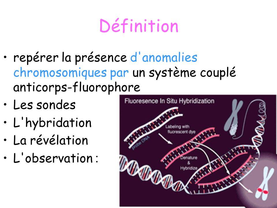 Les sondes un brin d ADN comportant des nucléotides modifiés, à partir d un brin matrice de départ.