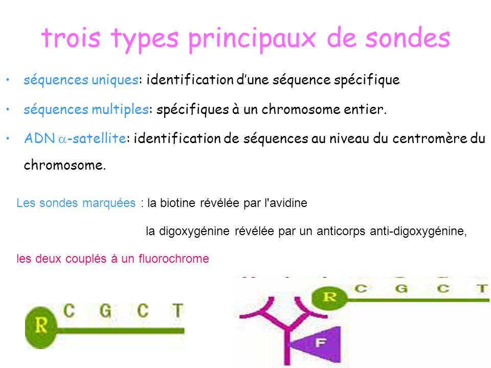trois types principaux de sondes séquences uniques: identification dune séquence spécifique séquences multiples: spécifiques à un chromosome entier. A