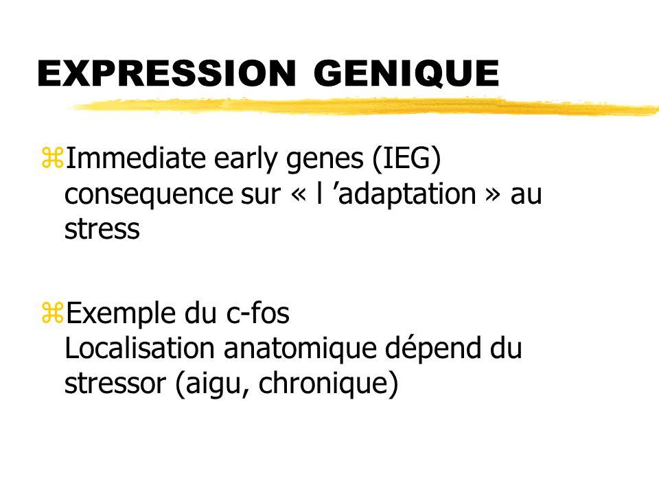 EXPRESSION GENIQUE zImmediate early genes (IEG) consequence sur « l adaptation » au stress zExemple du c-fos Localisation anatomique dépend du stresso