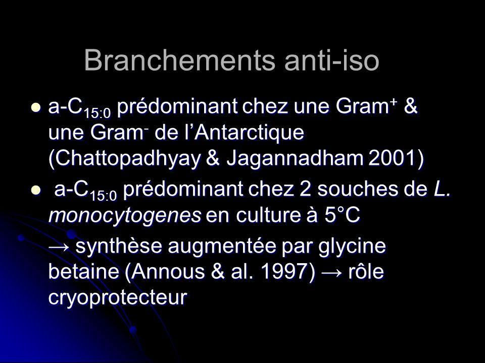 Branchements anti-iso a-C 15:0 prédominant chez une Gram + & une Gram - de lAntarctique (Chattopadhyay & Jagannadham 2001) a-C 15:0 prédominant chez u