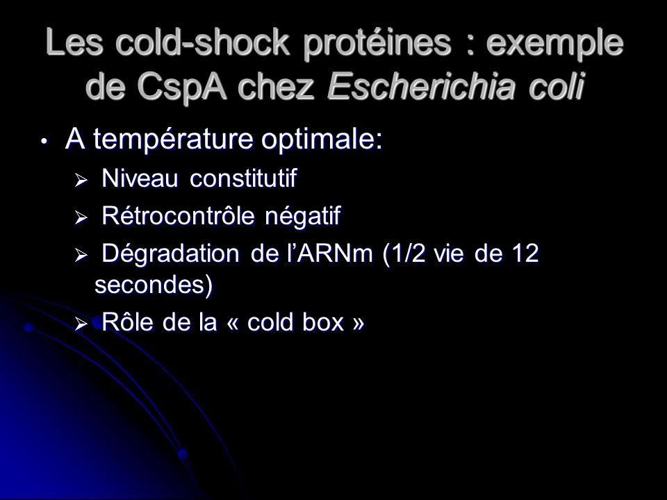 Les cold-shock protéines : exemple de CspA chez Escherichia coli Lors dun choc froid: Lors dun choc froid: Transcription de lADN mais rétrocontrôle négatif Transcription de lADN mais rétrocontrôle négatif La production de 5-UTR augmente la transcription La production de 5-UTR augmente la transcription Augmentation de la stabilité de lARNm de CspA (1/2 vie de 20 minutes) Augmentation de la stabilité de lARNm de CspA (1/2 vie de 20 minutes)