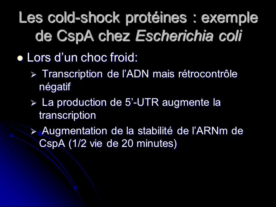 Les cold-shock protéines : exemple de CspA chez Escherichia coli 5-UTRCspATATATA A température optimale : répression A basse température : Synthèse CspA Synthèse protéique Rétrocontrôle négatif a température optimale et positif à basse température Augmente la synthèse .