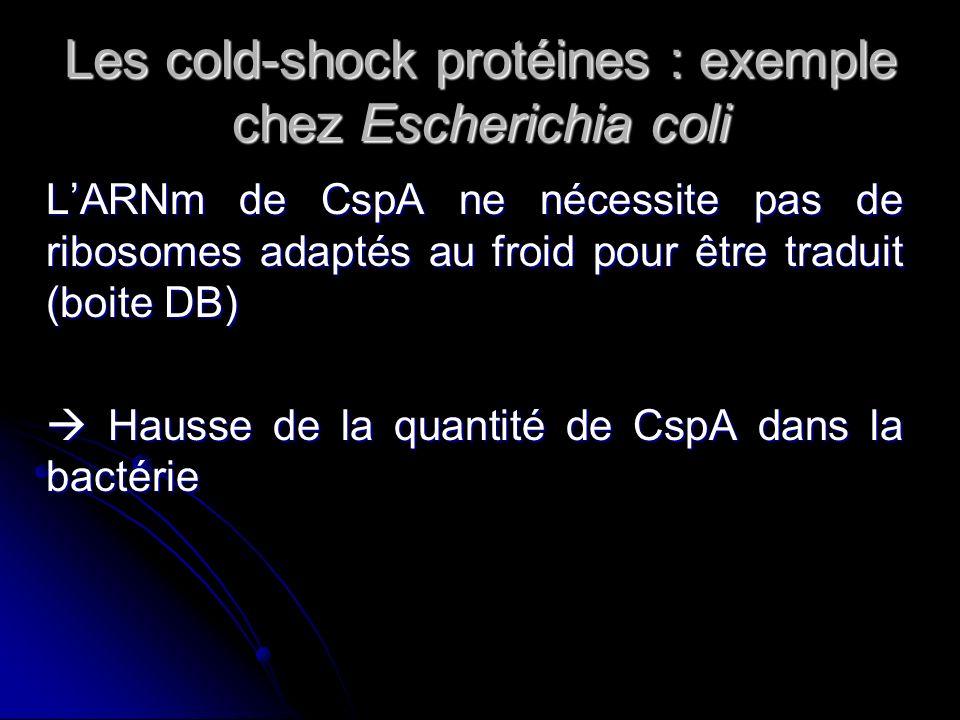 Rôle de CspA dans la transcription Facteur de transcription : Facteur de transcription : CspA reconnaît le promoteur de gène h-ns CspA reconnaît le promoteur de gène h-ns Action sur le gène gyrA Action sur le gène gyrA Protéines chaperonnes : Protéines chaperonnes : Action sur lADN Action sur lADN