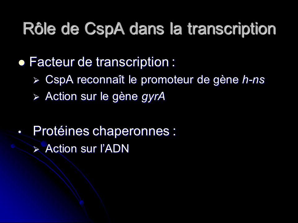 Rôle de CspA dans la transcription Modulation Début du choc : CspA se fixe sur les régions les plus affines de lADN Hausse de la transcription Hausse de la quantité de CspA Fin du choc : Fixation de CspA sur des régions moins affines de lADN Inaccessibilité de lADN par lARN poly Baisse de la transcription