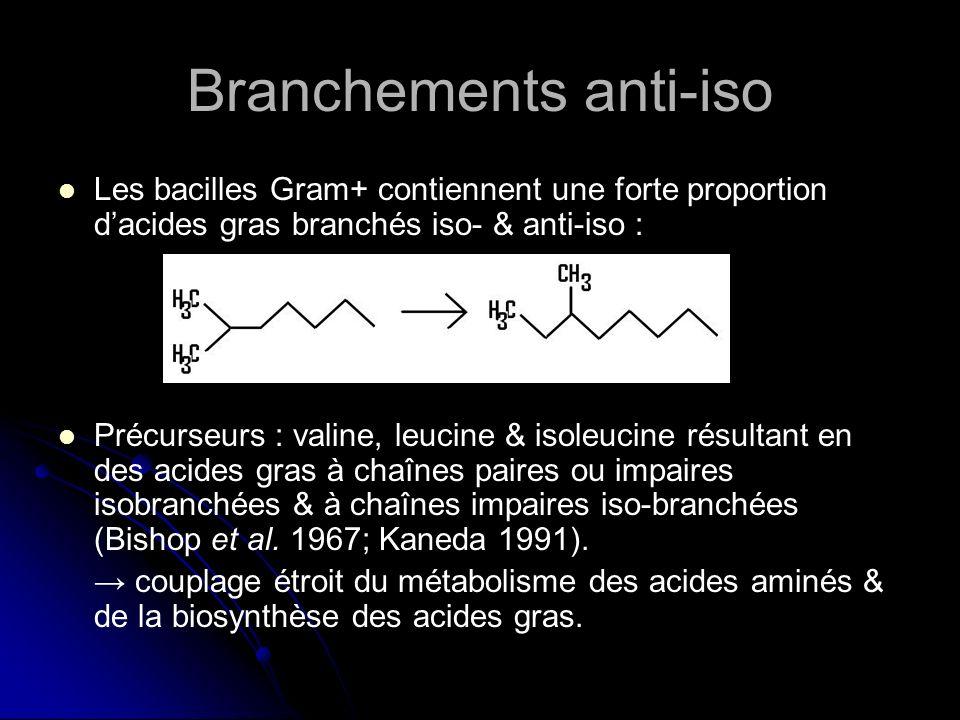 Branchements anti-iso a-C 15:0 prédominant chez une Gram + & une Gram - de lAntarctique (Chattopadhyay & Jagannadham 2001) a-C 15:0 prédominant chez une Gram + & une Gram - de lAntarctique (Chattopadhyay & Jagannadham 2001) a-C 15:0 prédominant chez 2 souches de L.