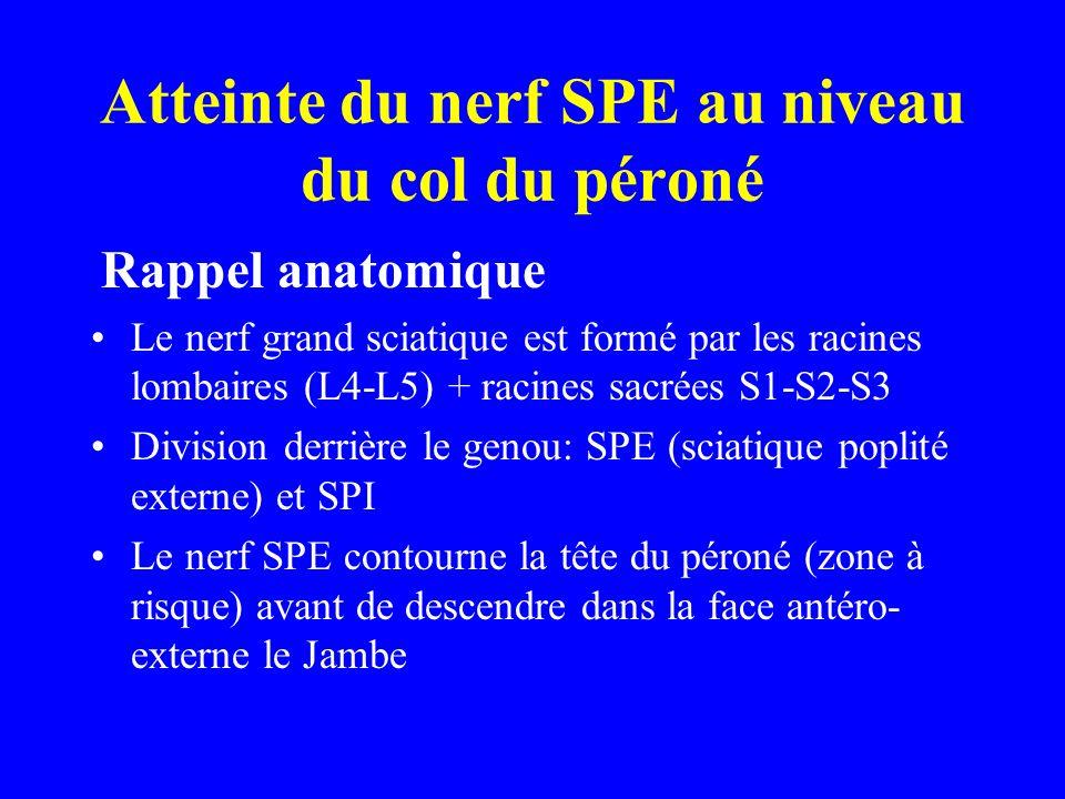 Atteinte du nerf SPE au niveau du col du péroné Rappel anatomique Le nerf grand sciatique est formé par les racines lombaires (L4-L5) + racines sacrée