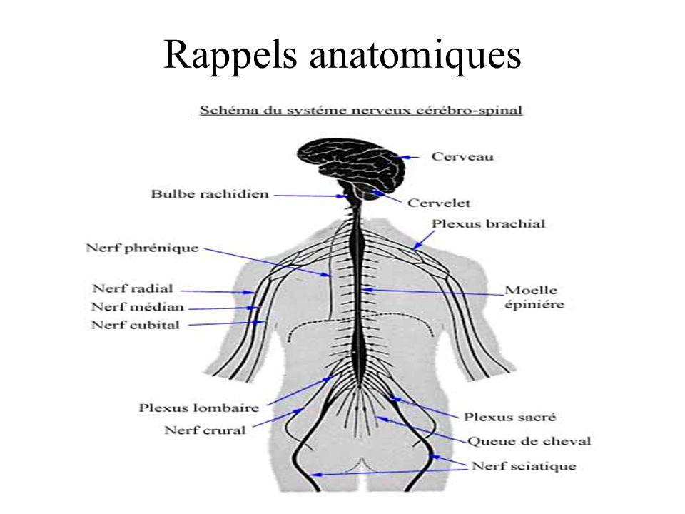 Rappels anatomiques
