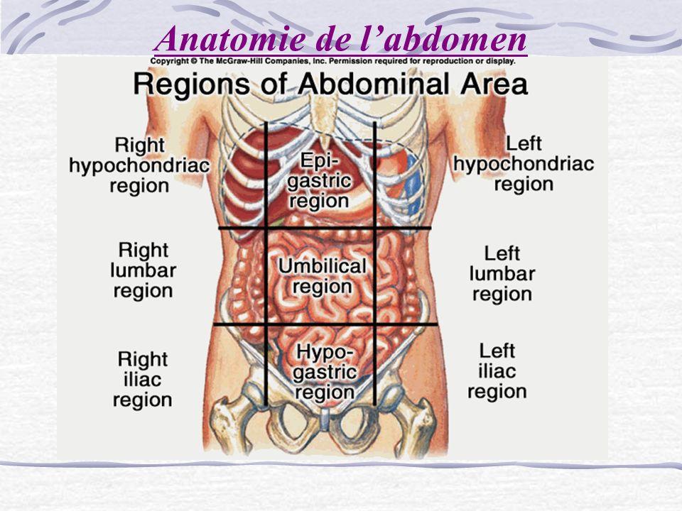 Anatomie de labdomen