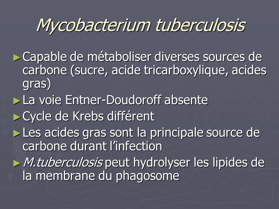 Mycobacterium tuberculosis Capable de métaboliser diverses sources de carbone (sucre, acide tricarboxylique, acides gras) Capable de métaboliser diverses sources de carbone (sucre, acide tricarboxylique, acides gras) La voie Entner-Doudoroff absente La voie Entner-Doudoroff absente Cycle de Krebs différent Cycle de Krebs différent Les acides gras sont la principale source de carbone durant linfection Les acides gras sont la principale source de carbone durant linfection M.tuberculosis peut hydrolyser les lipides de la membrane du phagosome M.tuberculosis peut hydrolyser les lipides de la membrane du phagosome