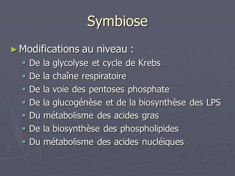 Symbiose Modifications au niveau : Modifications au niveau : De la glycolyse et cycle de Krebs De la glycolyse et cycle de Krebs De la chaîne respirat