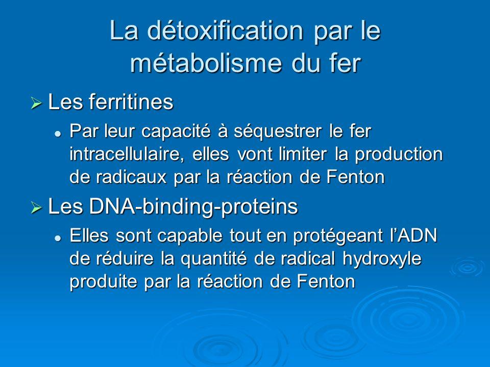 La détoxification par le métabolisme du fer Les ferritines Les ferritines Par leur capacité à séquestrer le fer intracellulaire, elles vont limiter la production de radicaux par la réaction de Fenton Par leur capacité à séquestrer le fer intracellulaire, elles vont limiter la production de radicaux par la réaction de Fenton Les DNA-binding-proteins Les DNA-binding-proteins Elles sont capable tout en protégeant lADN de réduire la quantité de radical hydroxyle produite par la réaction de Fenton Elles sont capable tout en protégeant lADN de réduire la quantité de radical hydroxyle produite par la réaction de Fenton