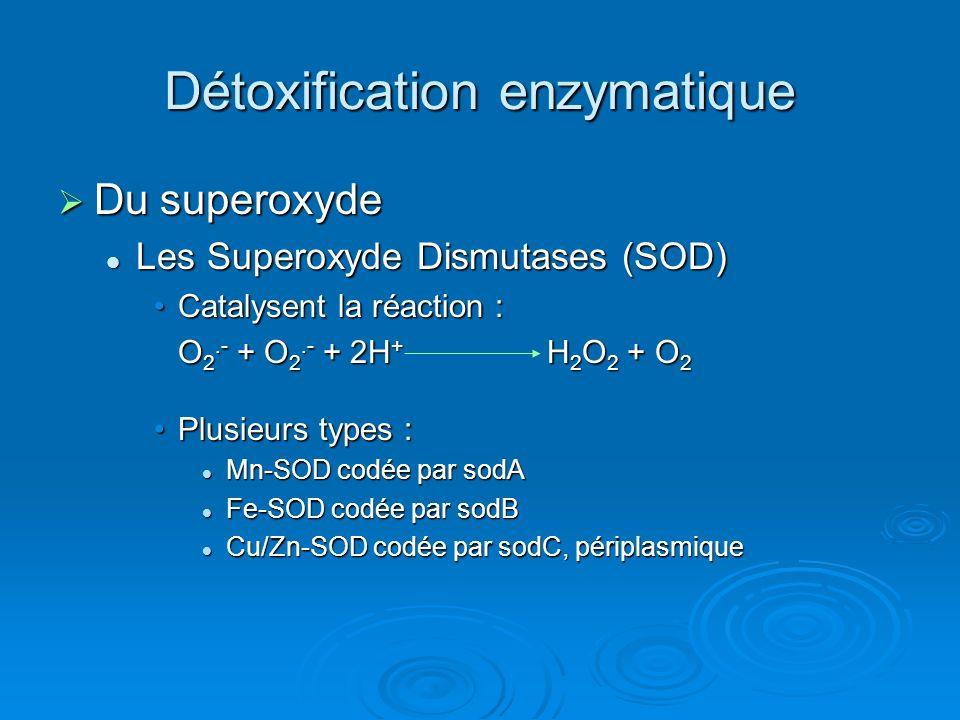 Détoxification enzymatique Du superoxyde Du superoxyde Les Superoxyde Dismutases (SOD) Les Superoxyde Dismutases (SOD) Catalysent la réaction :Catalysent la réaction : O 2.- + O 2.- + 2H + H 2 O 2 + O 2 Plusieurs types :Plusieurs types : Mn-SOD codée par sodA Mn-SOD codée par sodA Fe-SOD codée par sodB Fe-SOD codée par sodB Cu/Zn-SOD codée par sodC, périplasmique Cu/Zn-SOD codée par sodC, périplasmique