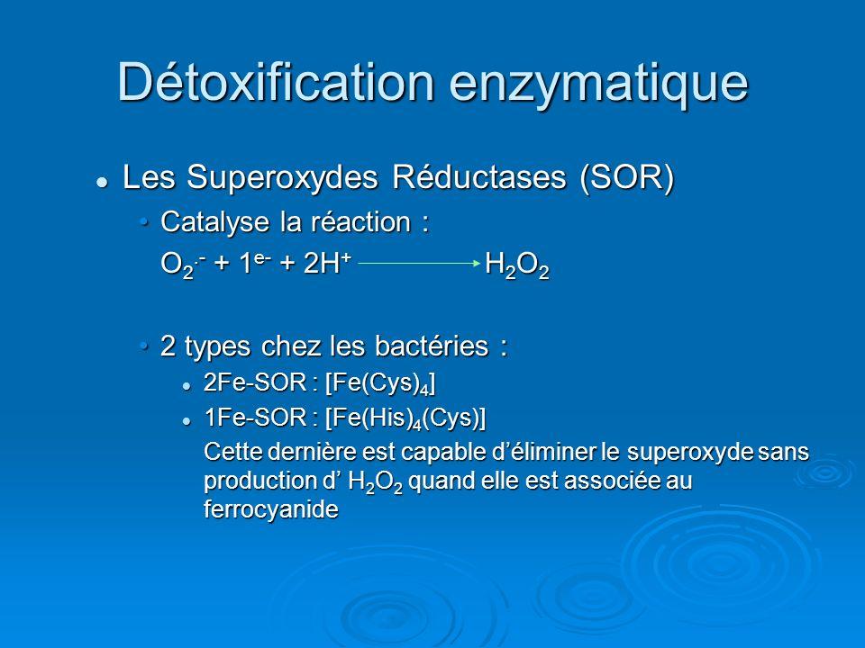 Détoxification enzymatique Les Superoxydes Réductases (SOR) Les Superoxydes Réductases (SOR) Catalyse la réaction :Catalyse la réaction : O 2.- + 1 e- + 2H + H 2 O 2 2 types chez les bactéries :2 types chez les bactéries : 2Fe-SOR : [Fe(Cys) 4 ] 2Fe-SOR : [Fe(Cys) 4 ] 1Fe-SOR : [Fe(His) 4 (Cys)] 1Fe-SOR : [Fe(His) 4 (Cys)] Cette dernière est capable déliminer le superoxyde sans production d H 2 O 2 quand elle est associée au ferrocyanide