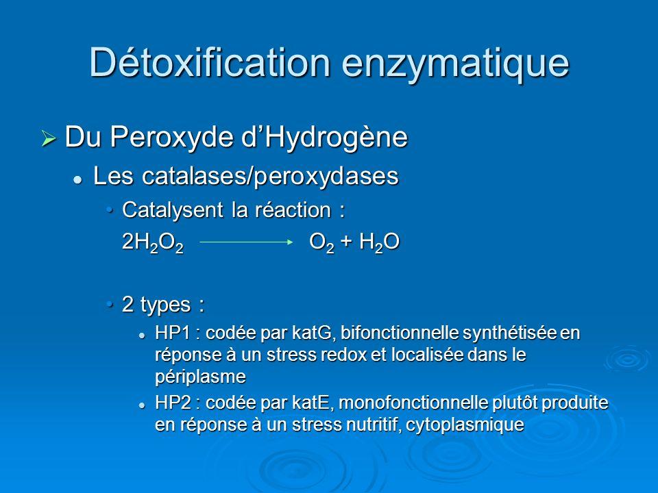 Détoxification enzymatique Du Peroxyde dHydrogène Du Peroxyde dHydrogène Les catalases/peroxydases Les catalases/peroxydases Catalysent la réaction :Catalysent la réaction : 2H 2 O 2 O 2 + H 2 O 2 types :2 types : HP1 : codée par katG, bifonctionnelle synthétisée en réponse à un stress redox et localisée dans le périplasme HP1 : codée par katG, bifonctionnelle synthétisée en réponse à un stress redox et localisée dans le périplasme HP2 : codée par katE, monofonctionnelle plutôt produite en réponse à un stress nutritif, cytoplasmique HP2 : codée par katE, monofonctionnelle plutôt produite en réponse à un stress nutritif, cytoplasmique