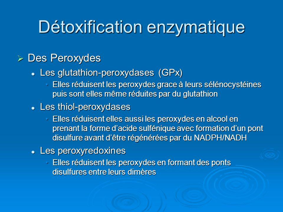 Détoxification enzymatique Des Peroxydes Des Peroxydes Les glutathion-peroxydases (GPx) Les glutathion-peroxydases (GPx) Elles réduisent les peroxydes grace à leurs sélénocystéines puis sont elles même réduites par du glutathionElles réduisent les peroxydes grace à leurs sélénocystéines puis sont elles même réduites par du glutathion Les thiol-peroxydases Les thiol-peroxydases Elles réduisent elles aussi les peroxydes en alcool en prenant la forme dacide sulfénique avec formation dun pont disulfure avant dêtre régénérées par du NADPH/NADHElles réduisent elles aussi les peroxydes en alcool en prenant la forme dacide sulfénique avec formation dun pont disulfure avant dêtre régénérées par du NADPH/NADH Les peroxyredoxines Les peroxyredoxines Elles réduisent les peroxydes en formant des ponts disulfures entre leurs dimèresElles réduisent les peroxydes en formant des ponts disulfures entre leurs dimères